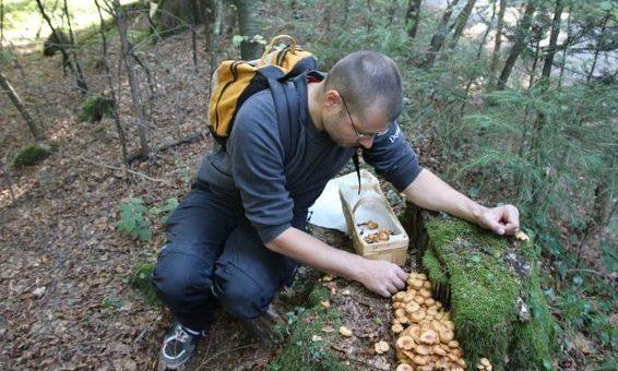Pilze sammeln kann ja so spannend sein!